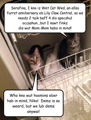 Cats in Dishwasher