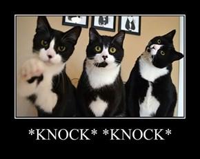 *KNOCK* *KNOCK*