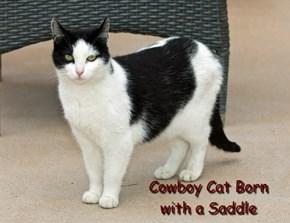 Cowboy Cat Born with a Saddle