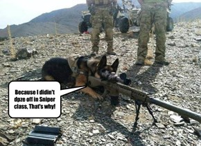 german shepherds make the best snipers