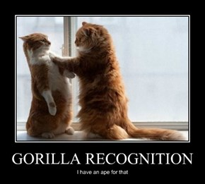 GORILLA RECOGNITION