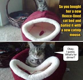 Cat gratitude.