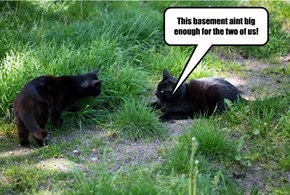 Cat Fight at the OK Corral.