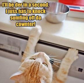 Kittie doings!