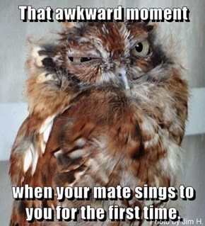 Good Lord, I've Married A Screech Owl!