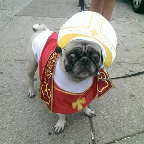 Pope Dogs Are Welcoming the Pope's Visit by Dressing Like Him