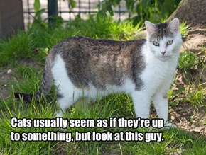 Cats usually seem as if they're up to something, but look at this guy.
