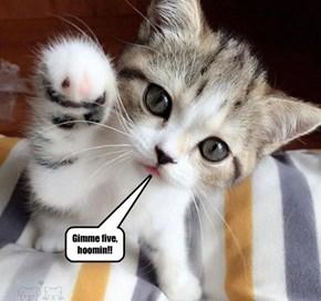 Gimme five, hoomin!!