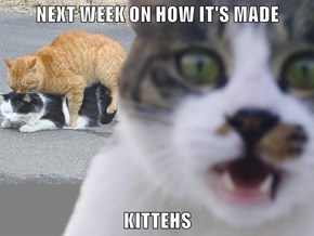 NEXT WEEK ON HOW IT'S MADE  KITTEHS