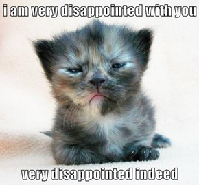 You Have Not Lived Up To My Kitteh Expectations.