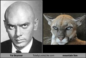 Yul Brynner Totally Looks Like mountain lion