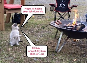 "Now *Kitteh* can say ""I haz a hot dog"" too"