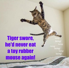 Tiger swore, he'd never eat  a toy rubber mouse again!