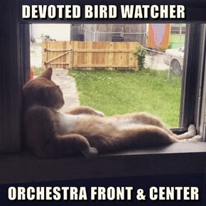 DEVOTED BIRD WATCHER  ORCHESTRA FRONT & CENTER