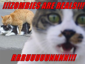 !!!ZOMBIES ARE REALS!!!  RRRUUUUUNNNN!!!