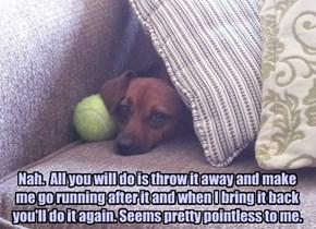 Wanna Play Fetch?