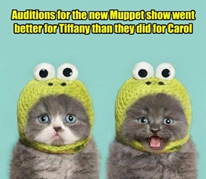 I'm in! And I'm not even a real Muppet!