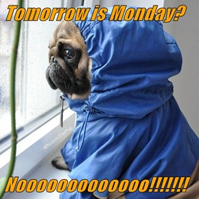 Tomorrow is Monday?  Nooooooooooooo!!!!!!!