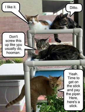 PVC Cat Tree is Pawlickity Very Correct - so don't let the Repo Man take it back!