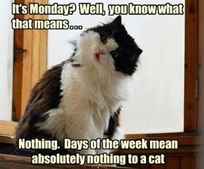 Except maybe Caturday