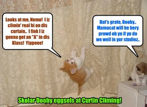 KKPS 2015: Dooby duz hims curtain climing homewurk for teh Climbing for Kitties Klass at KKPS..