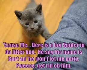 'Scuse Me... Dere is a big Spider in da litter box.  He say his name is Burt an' he won't let me potty. Pweese, get rid ob him.