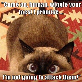 """""""Come on, human, wiggle your toes! I promise ...   I'm not going to attack them!"""""""
