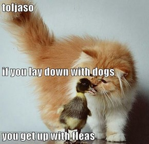 toljaso if you lay down with dogs you get up with fleas