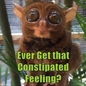 Ever Get that Constipated Feeling?