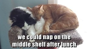 we could nap on the                          middle shelf after lunch