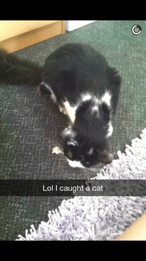 Someone Met a Stray Cat and Documented It From Capture to Friendship on Snapchat