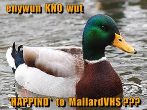 enywun  KNO  wut  *HAPPIND*  to  MallardVHS ???