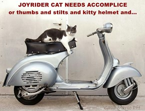 JOYRIDER CAT NEEDS ACCOMPLICE                    or thumbs and stilts and kitty helmet and...