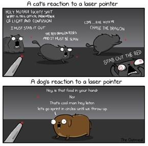 Cat versus Laser versus Dog versus Laser