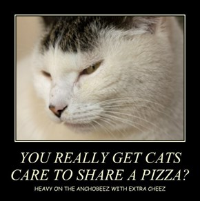 YOU REALLY GET CATS CARE TO SHARE A PIZZA?