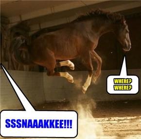 NO LIKE SNAKES!!! FEELING A LIDDLE JUMPY?