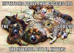 MUTATIONS PROVE THAT GOGGIES ARE THE                                                            GODS OF THE INTERNET. BITE IT, KITTEHS