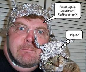 Foil Cat