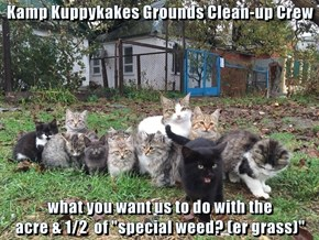 "Kamp Kuppykakes Grounds Clean-up Crew  what you want us to do with the                                                 acre & 1/2  of ""special weed? (er grass)"""