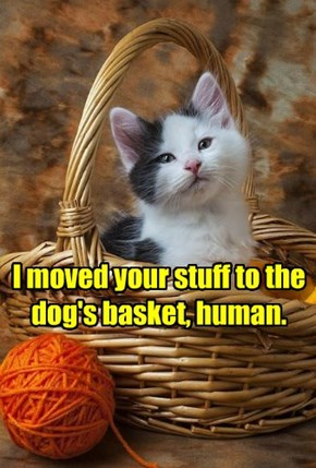 I moved your stuff to the dog's basket, human.
