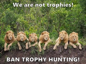 We are not trophies!  BAN TROPHY HUNTING!
