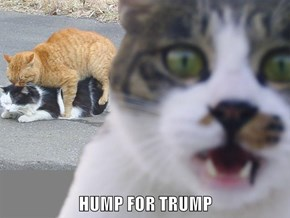 HUMP FOR TRUMP