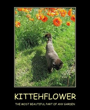 KITTEHFLOWER