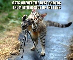 CATS CREATE THE BEST PHOTOS                                      FROM EITHER SIDE OF THE LENS