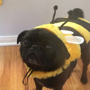 Pet Costumes That Will Make This Halloween the Best One Yet