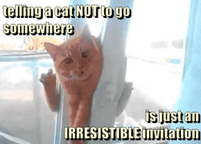 telling a cat NOT to go somewhere   is just an                                   IRRESISTIBLE invitation
