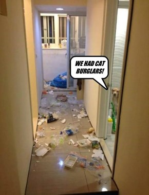 WE HAD CAT BURGLARS!