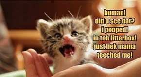 human! did u see dat? i pooped! in teh litterbox! just liek mama  teeched me!