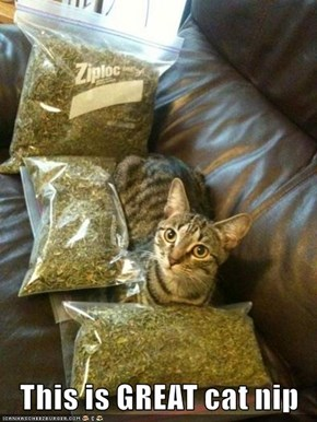 This is GREAT cat nip