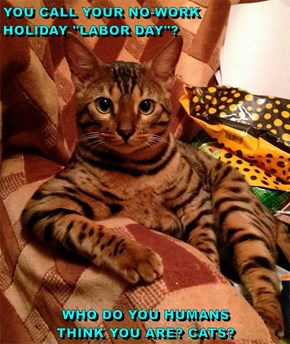 "YOU CALL YOUR NO-WORK            HOLIDAY ""LABOR DAY""?  WHO DO YOU HUMANS                      THINK YOU ARE? CATS?"